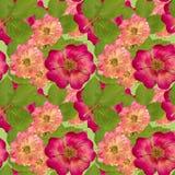 野蔷薇,野生玫瑰, 被按的干燥flowe无缝的样式纹理  库存图片