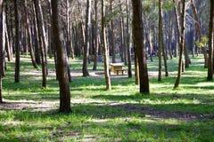 野餐区在公园 免版税图库摄影