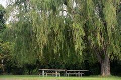 野餐区 图库摄影
