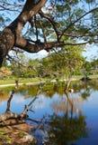 野餐在公园自然全景湖 库存照片