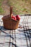 野餐在草甸 红色苹果篮子 库存图片