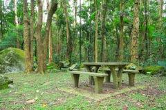 野餐安排在森林里 图库摄影