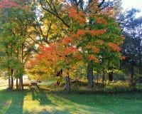 野餐桌在秋天树下 库存图片