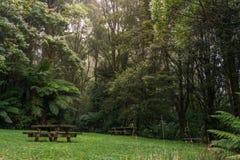 野餐桌在豪华的绿色有雾的森林里 库存图片