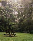 野餐桌在豪华的绿色有雾的森林里 图库摄影