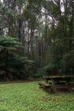 野餐桌在豪华的绿色有雾的森林里 免版税库存照片