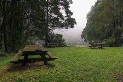 野餐桌在豪华的绿色有雾的森林里 免版税库存图片