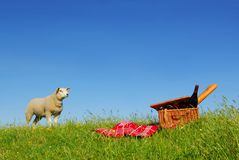 野餐绵羊 库存图片