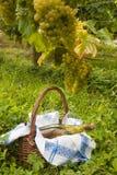 野餐葡萄园 库存照片