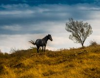 野马在黑暗的天空下 免版税库存照片