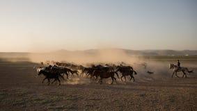 野马成群在芦苇的赛跑, kayseri,火鸡 库存照片