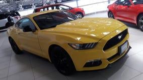 野马汽车黄色颜色在陈列室里 库存照片