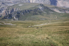 野马牧群  图库摄影