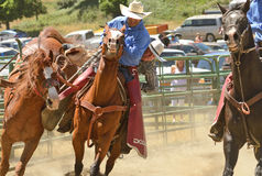 野骑马 免版税库存图片