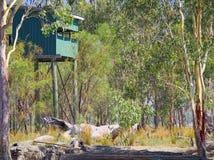 野鸟观察者的鸟皮湖的Broadwater昆士兰澳大利亚。 免版税库存照片