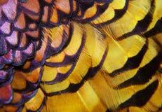 野鸡羽毛-五颜六色的宏指令 库存照片