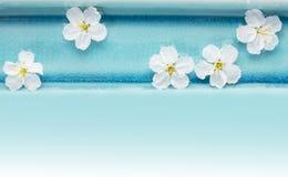 野黑樱桃在蓝色碗开花用水,温泉 免版税图库摄影