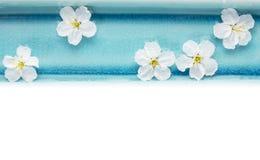 野黑樱桃在蓝色碗开花用水,被隔绝 免版税库存图片