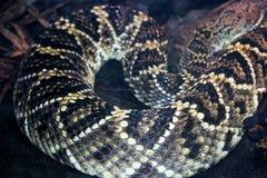 金刚石东部金刚石后面响尾蛇的皮肤样式 库存照片