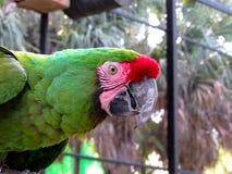 金刚鹦鹉在鸟舍 免版税图库摄影