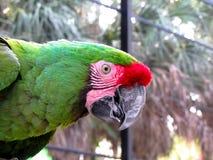 金刚鹦鹉在鸟舍 图库摄影
