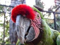 金刚鹦鹉在鸟舍 免版税库存图片