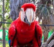 金刚鹦鹉在鸟舍 库存图片