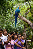 金刚鹦鹉在Parque Historico,文化和 免版税库存图片