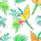 金刚鹦鹉无缝的样式 透明的背景 棕榈叶和 免版税库存图片