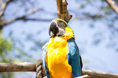 金刚鹦鹉鸟 库存图片
