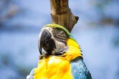 金刚鹦鹉鸟 库存照片