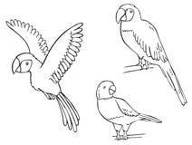 金刚鹦鹉鹦鹉和手表项链 免版税图库摄影