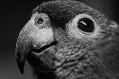 金刚鹦鹉 免版税库存照片