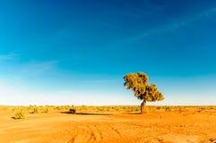 金合欢在摩洛哥的沙漠 库存照片
