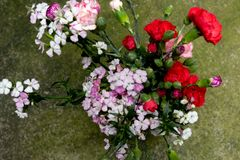 金合欢李子和康乃馨组合花安排 图库摄影