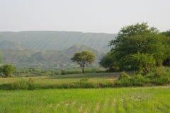 金合欢树和山 库存照片