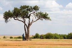金合欢树在马塞人玛拉国家公园 库存照片