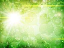 金合欢背景绿色叶子 10 eps 库存照片