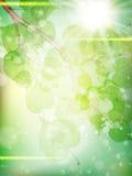 金合欢背景绿色叶子 10 eps 库存图片