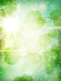 金合欢背景绿色叶子 10 eps 免版税库存图片