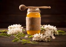 金合欢蜂蜜和开花的金合欢 图库摄影