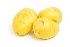 金土豆育空 免版税库存照片