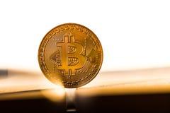 金在白色背景安置的bitcoin硬币根据日落 真正货币符号 免版税库存照片