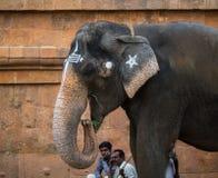 金奈, INDIA-FEBRUARY 13 :从印度的大象的祝福F的 库存图片