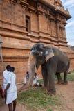 金奈, INDIA-FEBRUARY 13 :从印度的大象的祝福F的 免版税库存图片