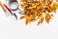 金子与喷壶的秋叶和在白色背景,顶视图的园艺工具 秋天从事园艺 图库摄影