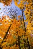 金子到达天空的10月 免版税库存图片