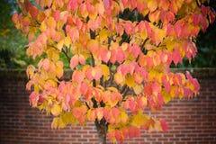 金子和红色秋天颜色 免版税图库摄影
