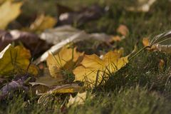 金子和绿色,秋天对比  库存图片