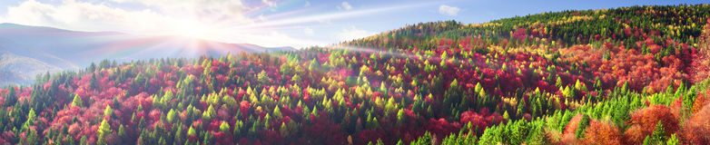金子和紫色11月 库存照片